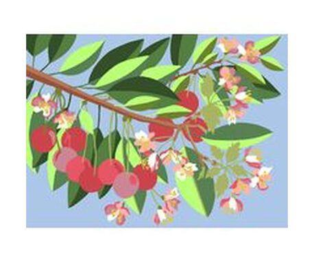 Kanwa we wzory w kwiaty - Wiśnie. Do haftowania mulinami i wełną gobelinową.