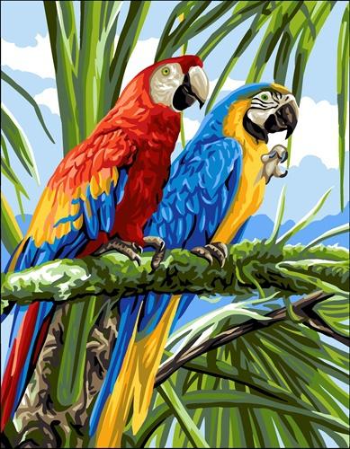 Kanwa z papugami, kanwa do wyszywania muliną Anchor i wełną Anchor.